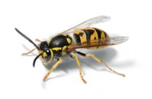 Pest-Tec 1